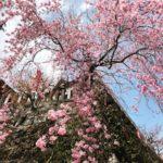 自然の力を敬う心・紀伊山地〜大峰山系の旅1