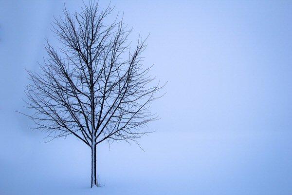 冬に調子悪い人、ゆっくり静かにしていよう