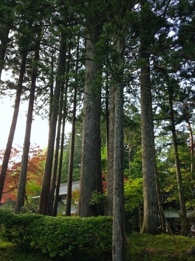 今年も高野山に行ってきました