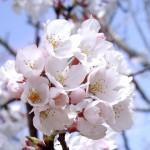 「同期の桜」はいい歌だった/歌詞編