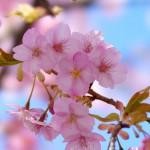 「同期の桜」はいい歌だった/音楽編