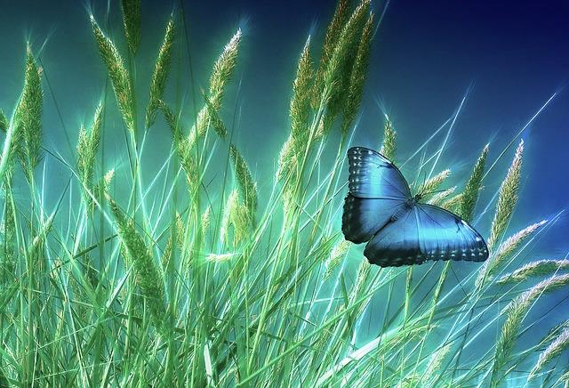 grass-1058118