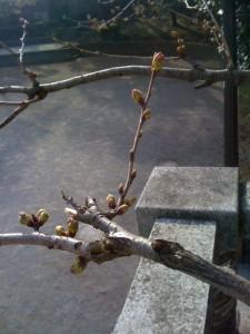 春だ・芽出たい