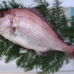 作曲とお魚の養殖