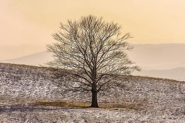 冬枯れの木の中に、きっと咲く花を思う